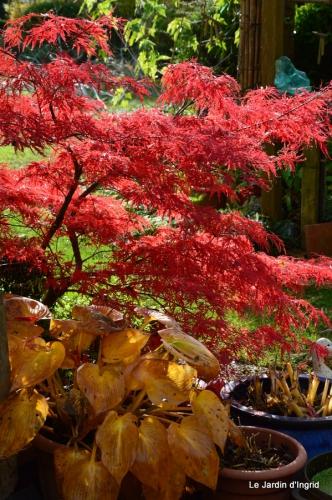 jardin automne ,petits roses 084.JPG