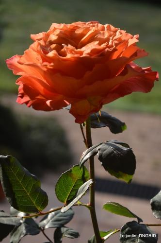 anniversaire Romane,gloriette,jonquilles,rose,coucher de soleil 087.JPG