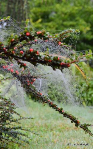 Lalinde,toiles d'araignées,les filles à St Astier 044.JPG