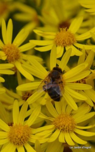 Arya,roses,cygnes,coulobre,nigelles,abeille,cabane 122.JPG