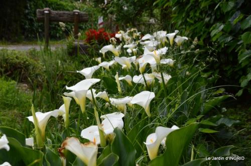 Roses du jardin,soirée Monpazier,puces Eymet 182.JPG