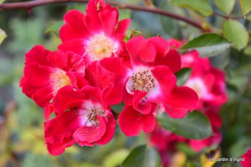 jardin,puces Eymet 124.JPG