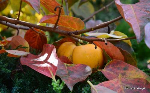 troncs,automne,vieilles photos 111.JPG