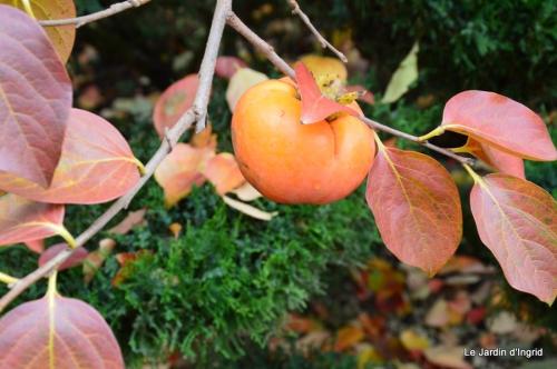 travaux,érable rouge,abeilles,Monpazier,jardin 067.JPG