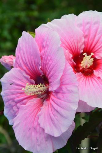 jardin,les filles,fleurs Peyrichou 009.JPG