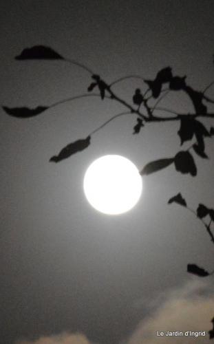 clair de lune 008.JPG