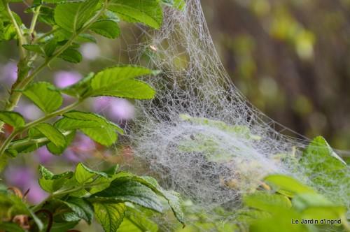 Lalinde,toiles d'araignées,les filles à St Astier 053.JPG