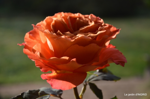 anniversaire Romane,gloriette,jonquilles,rose,coucher de soleil 090.JPG