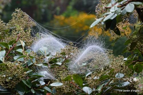 Lalinde,toiles d'araignées,les filles à St Astier 035.JPG