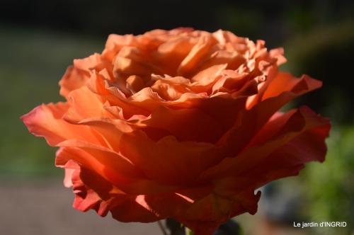 anniversaire Romane,gloriette,jonquilles,rose,coucher de soleil 086.JPG