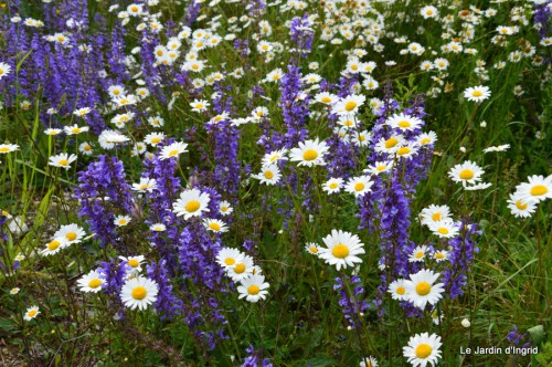 canal,fleurs blanches,marguerites,LE FLEIX,osier 026.JPG