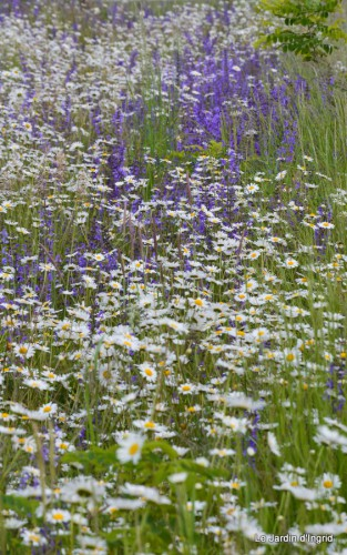 canal,fleurs blanches,marguerites,LE FLEIX,osier 020.JPG