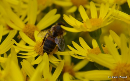 Arya,roses,cygnes,coulobre,nigelles,abeille,cabane 126.JPG