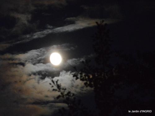 clair de lune,jardin automne,coucher de soleil 038.JPG