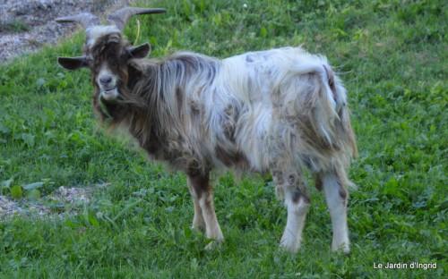 moi,Trémolat,Limeuil,Mombazillac,Bridoire,chèvres Banes,jardin,R 141.JPG
