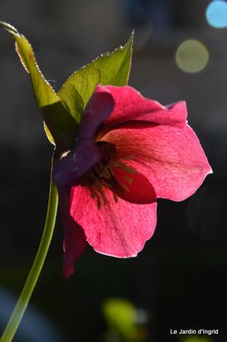 bouquet mamy,jacinthes,semis,jardin 053.JPG