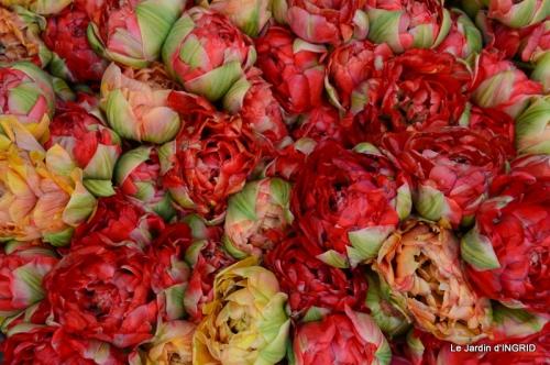 jardin avril,tulipes pivoine,iris d'eau,chenilles 051.JPG
