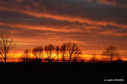 jonquilles,Montignac,massifs,coucher de soleil 074.JPG