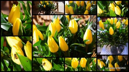 2015-02-09 tulipes,crocus ,jardin1.jpg