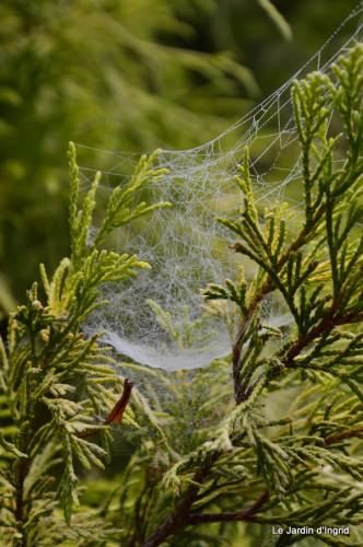 Lalinde,toiles d'araignées,les filles à St Astier 046.JPG