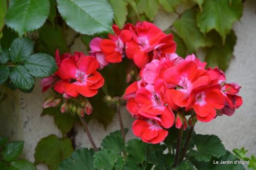 CADOUIN,cascade,iris,roses,fl.sauvages 035.JPG