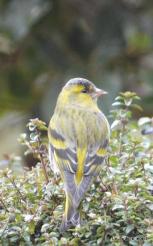 les oiseaux sur terrasse 015.JPG