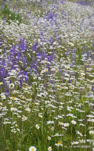 canal,fleurs blanches,marguerites,LE FLEIX,osier 019.JPG