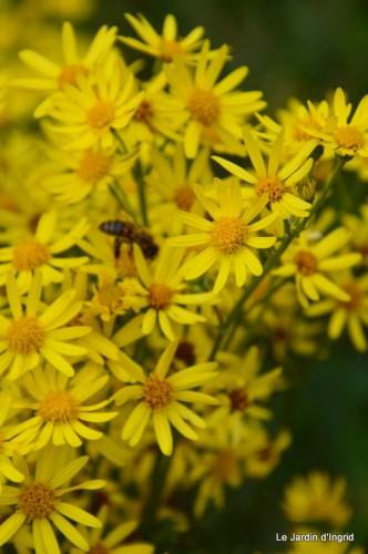 Arya,roses,cygnes,coulobre,nigelles,abeille,cabane 125.JPG