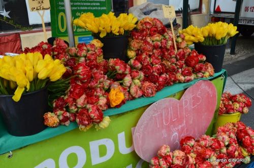 jardin avril,tulipes pivoine,iris d'eau,chenilles 050.JPG