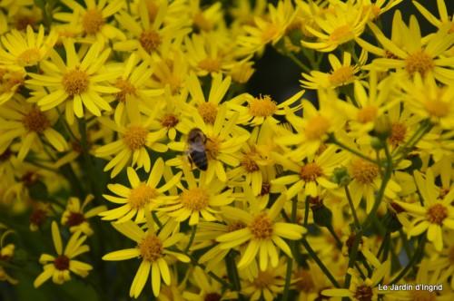 Arya,roses,cygnes,coulobre,nigelles,abeille,cabane 121.JPG