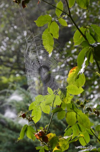 Lalinde,toiles d'araignées,les filles à St Astier 050.JPG