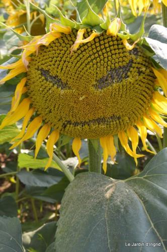 tournesols,pt jardin,nénuphard,libellules,lavande bouquet,carava 025.JPG