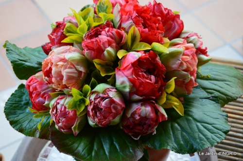 jardin avril,tulipes pivoine,iris d'eau,chenilles 052.JPG