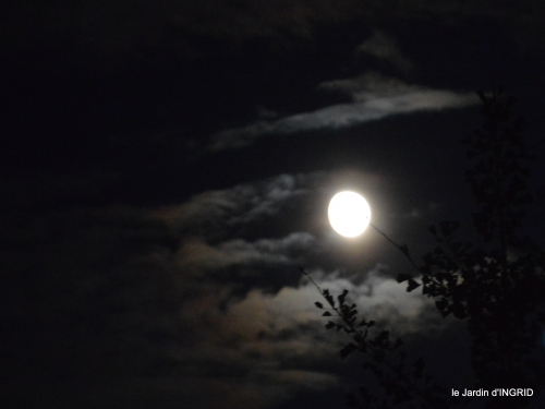 clair de lune,jardin automne,coucher de soleil 039.JPG