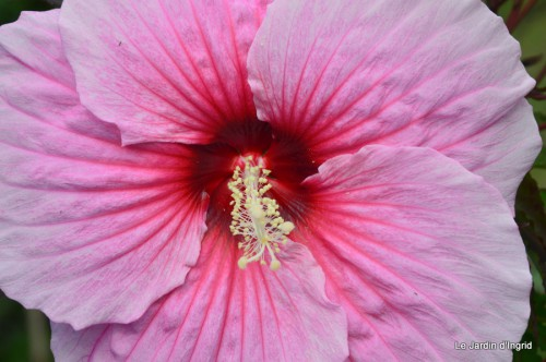 jardin,les filles,fleurs Peyrichou 015.JPG