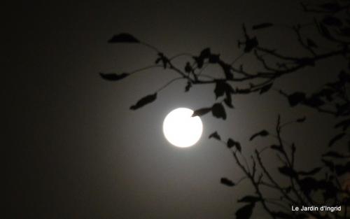 clair de lune 010.JPG