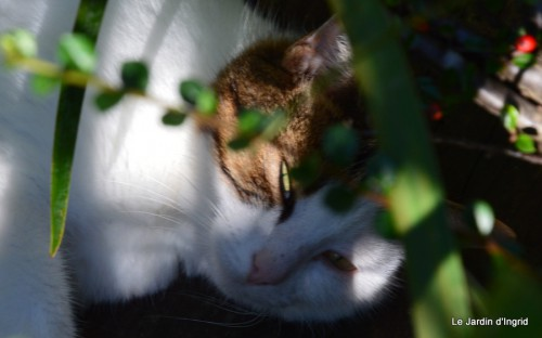 jardin début d'automne ,Sophie,rouge 081.JPG