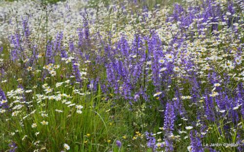 canal,fleurs blanches,marguerites,LE FLEIX,osier 022.JPG
