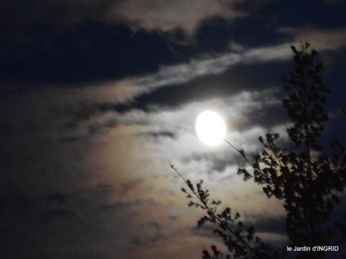 clair de lune,jardin automne,coucher de soleil 037.JPG