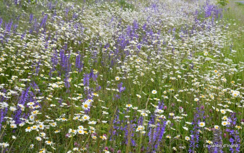 canal,fleurs blanches,marguerites,LE FLEIX,osier 018.JPG