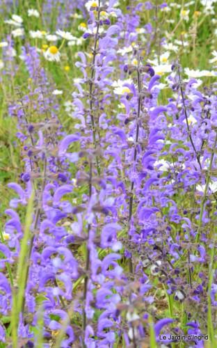 canal,fleurs blanches,marguerites,LE FLEIX,osier 032.JPG