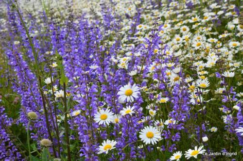 canal,fleurs blanches,marguerites,LE FLEIX,osier 027.JPG