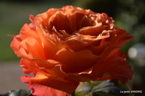 anniversaire Romane,gloriette,jonquilles,rose,coucher de soleil 089.JPG