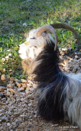 moi,Trémolat,Limeuil,Mombazillac,Bridoire,chèvres Banes,jardin,R 146.JPG