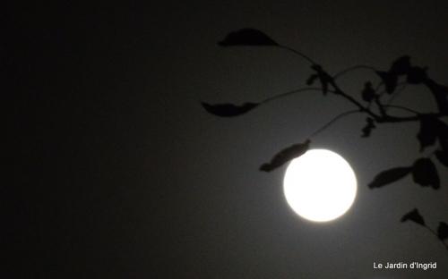 clair de lune 009.JPG