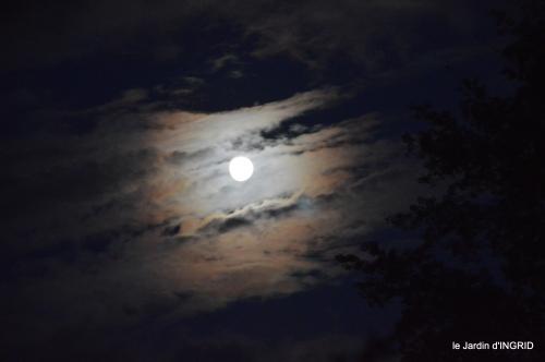 clair de lune,jardin automne,coucher de soleil 034.JPG