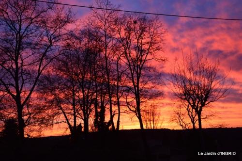 jonquilles,Montignac,massifs,coucher de soleil 076.JPG