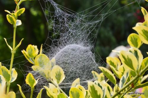 Lalinde,toiles d'araignées,les filles à St Astier 048.JPG