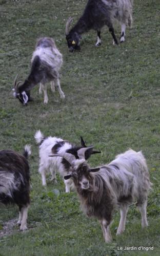moi,Trémolat,Limeuil,Mombazillac,Bridoire,chèvres Banes,jardin,R 149.JPG