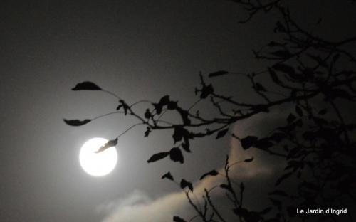 clair de lune 006.JPG